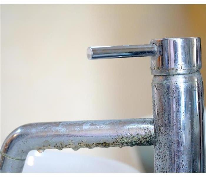 Mold growing on bathroom faucet